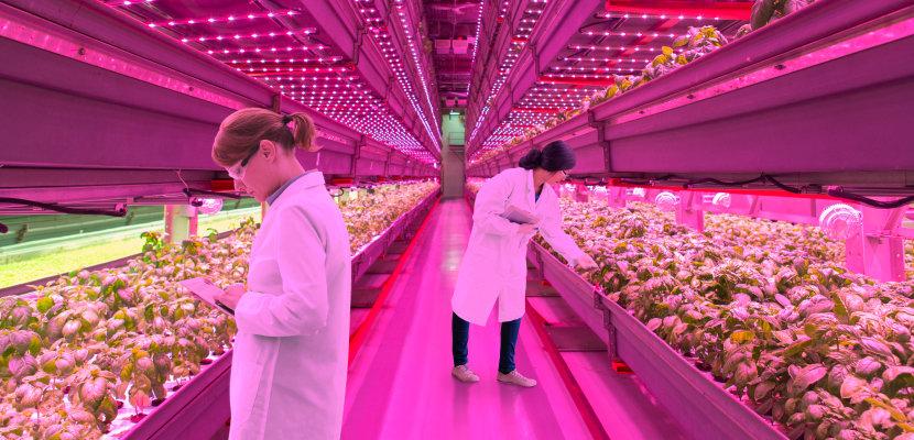 植物照明用 LED