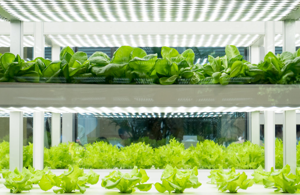 Horticulture Applications - everything from LED grow lights to complete solutions