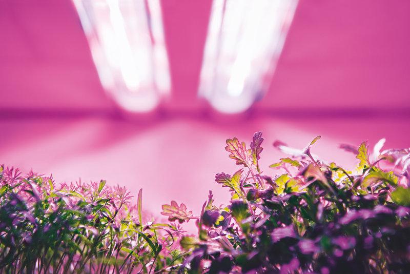 植物Webtool