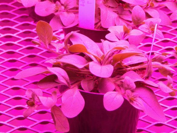 植物照明竞争力