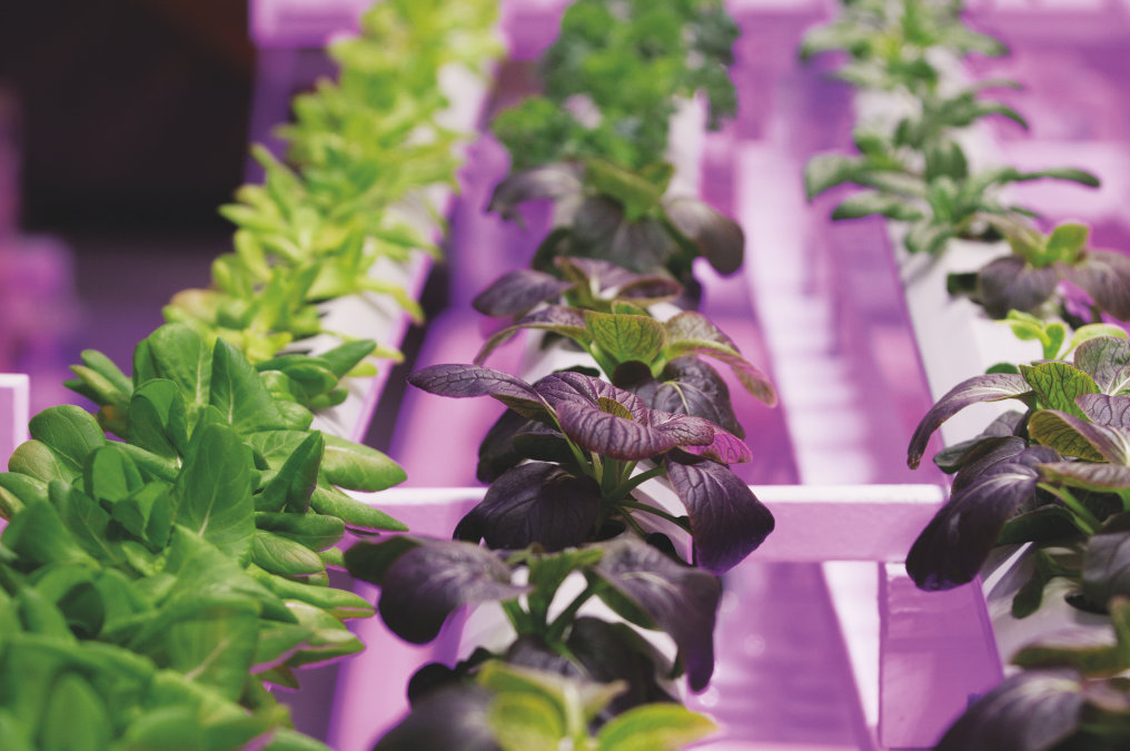 Horticultural Lighting / Agricultural Lighting by OSRAM Opto Semiconductors